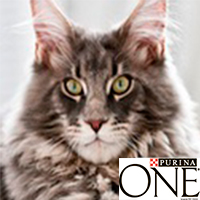 Форум Заботы PURINA ONE