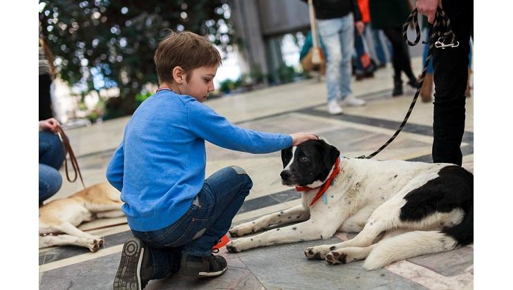 PURINA и Pro Plan помогают бездомным животным<br>