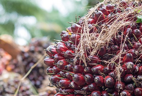 palm-oil-sourcing